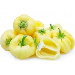 Σπόροι γλυκιά πιπεριά DIAMOND (Λευκό) 1.55 - 1