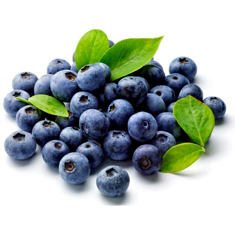 Bilberry - Whortleberry Seeds (Vaccinium myrtillus) 1.95 - 1
