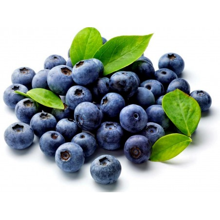 Bilberry - Whortleberry Samen (Vaccinium myrtillus) 1.95 - 1