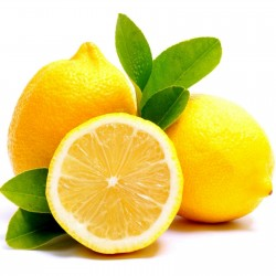 Citron frön (Citrus × limon) 1.95 - 1