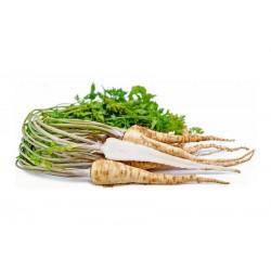 Rotpersilja Medium lång Frön 2.55 - 1
