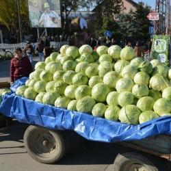 Σπόροι του λάχανου Futog 400 Σπόροι 2.25 - 2