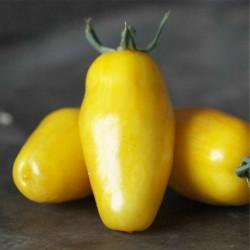 Banana Legs Tomato Seeds 1.85 - 4