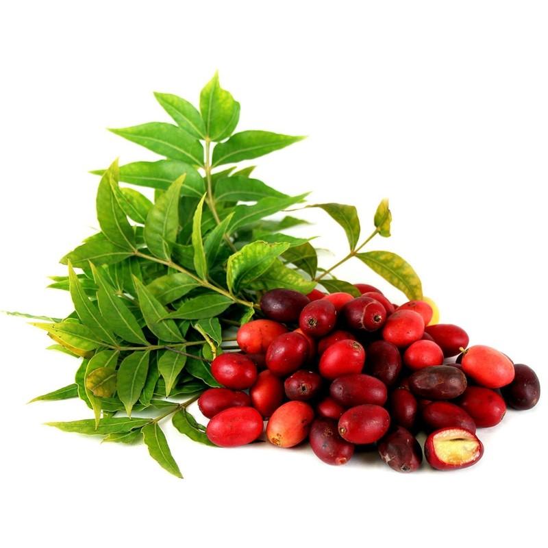Afrikanische Wilde Pflaume, Kaffir Plum Samen 3.95 - 1