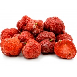 Sementes De Chinês Amora vermelha - Che Chinês (Maclura tricuspidata) 2.95 - 1