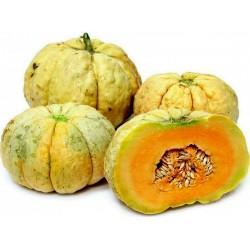 Semillas de melón PRESCOTT FOND BLANC 2.45 - 1