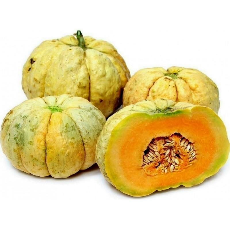 Graines de Melon PRESCOTT FOND BLANC 2.45 - 1