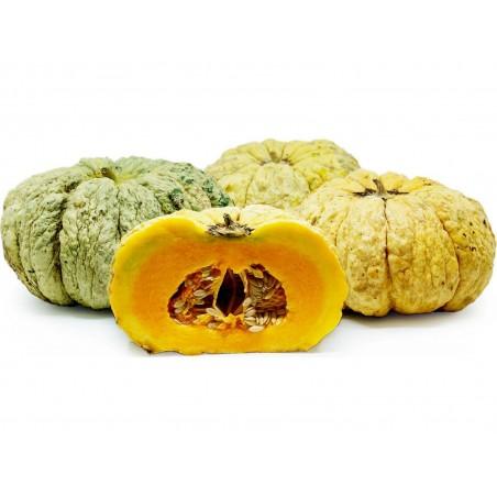 Semillas de melón PRESCOTT FOND BLANC 2.45 - 2