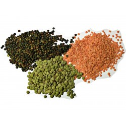 Semillas de Lenteja (Lens culinaris) 1.85 - 1