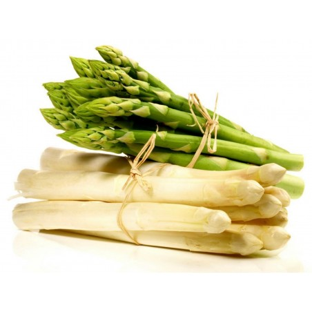 Asparagus officinalis Seeds ''Mary Washington'' 1.65 - 1