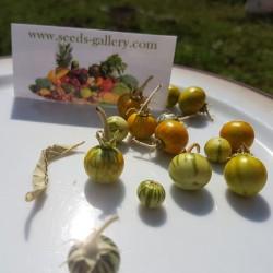 Sodomsapfel Samen (Solanum linnaeanum) 1.45 - 2