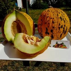 Graines de melon de Thrace ou d'Evros appelé aussi Tête d'or de Thrâce 1.55 - 1