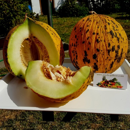Golden Head or Thrace Melon Seeds – Best Greek Melon