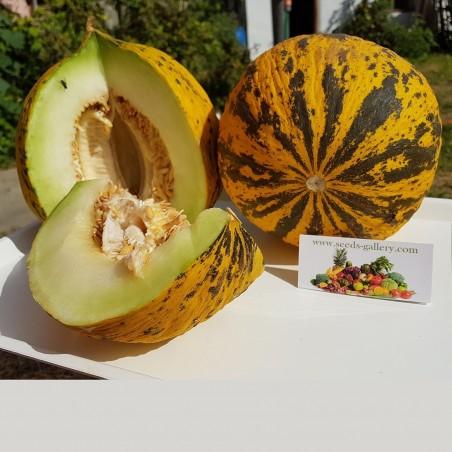 Goldene Kopf - Thrakien Melonen Samen 1.55 - 2