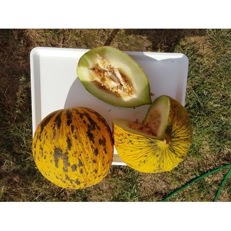 Graines de melon de Thrace ou d'Evros appelé aussi Tête d'or de Thrâce 1.55 - 3