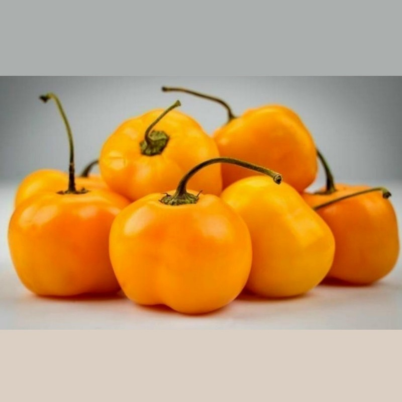 """Jelena"" Yellow Sweet Pepper Seeds - large fruits 1.75 - 1"