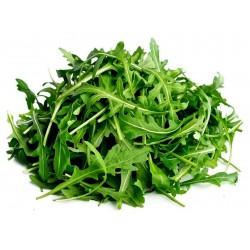 600 Graines de Roquette (plante) 2.5 - 1