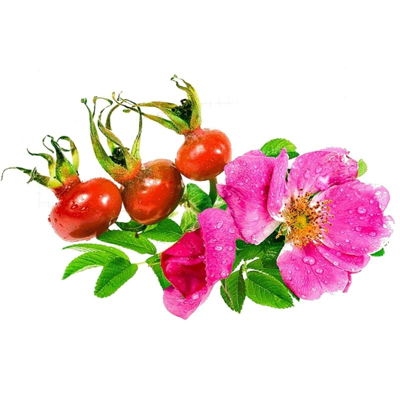 Apfel-Rose, Japan-Rose Samen (Rosa Rugosa) 1.65 - 1