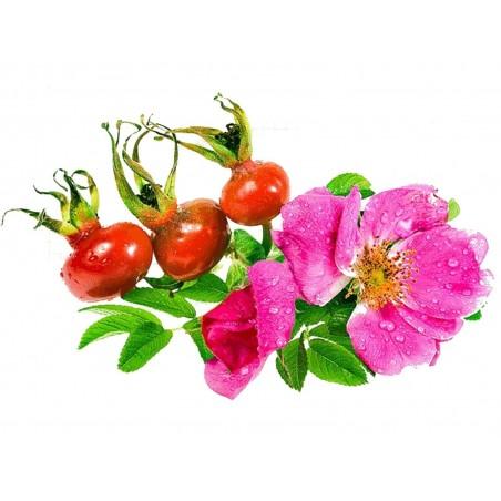 Apfel-Rose, Japan-Rose Samen (Rosa Rugosa)