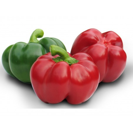 GREYGO Hungarian sweet pepper seeds 1.55 - 1