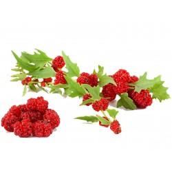 Σπόροι Φράουλα Σπανάκι 1.55 - 1