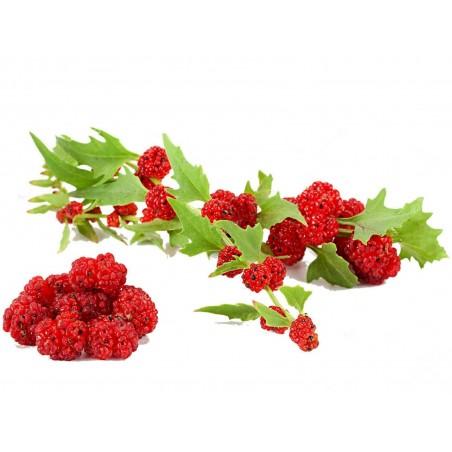 Σπόροι Φράουλα Σπανάκι