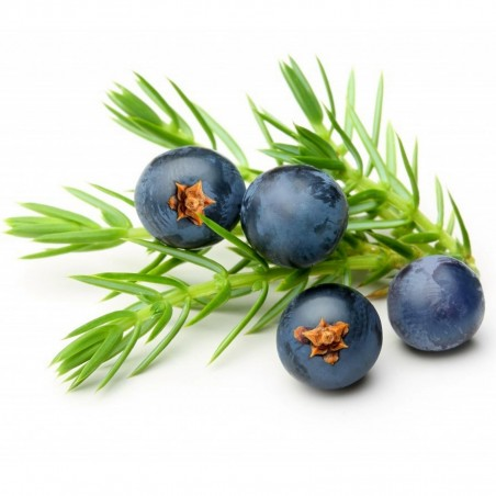 Juniper Berry Seeds (Juniperus communis) 1.65 - 6