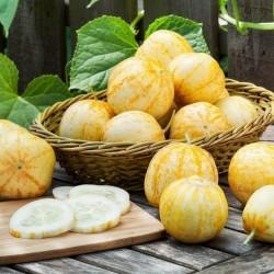 Citrongurka Frö (Lemon Cucumber) 1.95 - 2