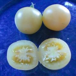 Sementes de Cereja Branco - White Cherry 1.95 - 2
