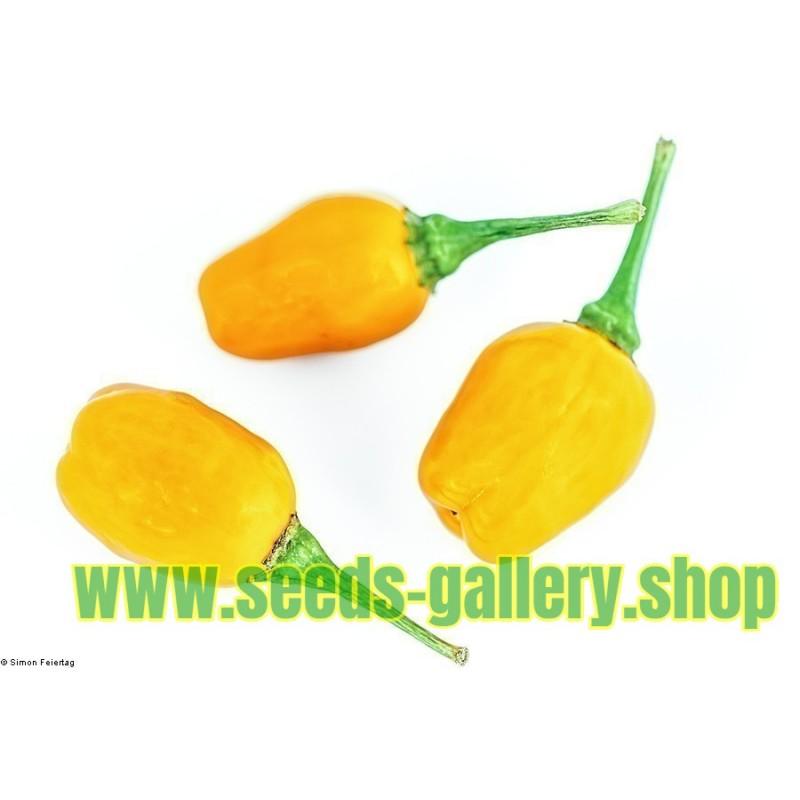 Sementes de Pimentão Cumari ou Passarinho (Capsicum chinense)