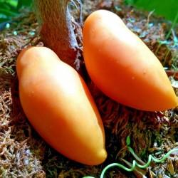 Sementes de tomate Tschuchloma 1.85 - 1
