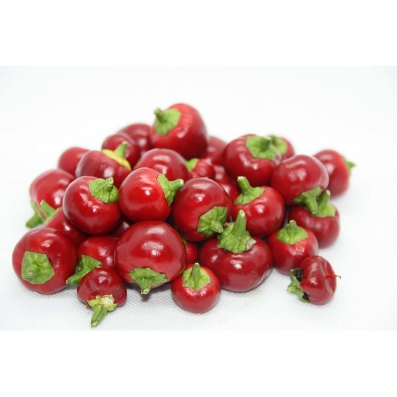 Baccio Di Satana - Satans Kiss Seme Chili Papricice 2.25 - 1