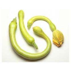 Fröer till zucchini Tromba d'Albenga 2.35 - 5