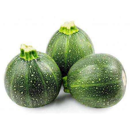 Zucchini Samen Tonda Chiara di Toscana