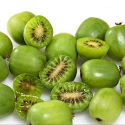 Semillas de Mini Kiwi (Actinidia arguta) resistente a las heladas a -34C 1.5 - 3