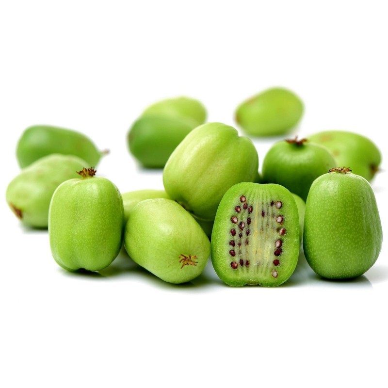 Graines Kiwai ou Kiwi de Sibérie (actinidia arguta) Rusticité -34C 1.5 - 1
