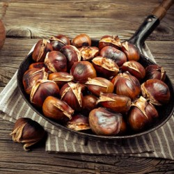 Sweet chestnut - Marron Seeds 2.5 - 2