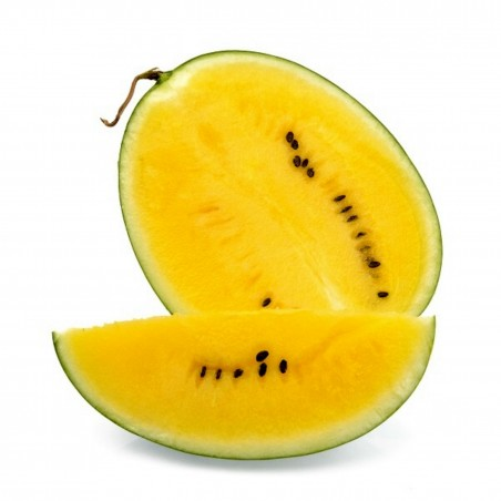100 Samen JANOSIK Gelbe Wassermelone  - 1