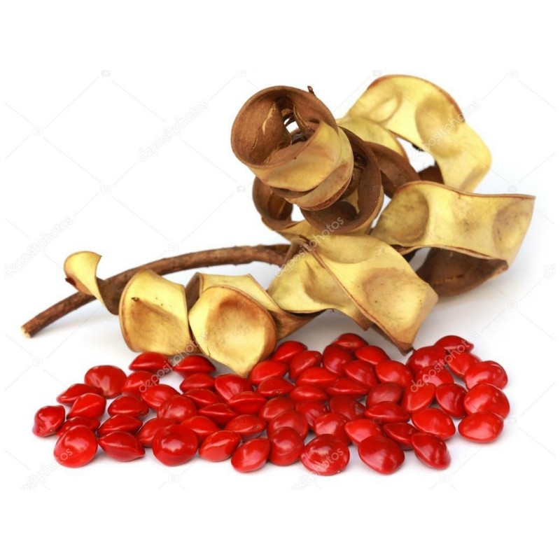 Red Sandalwood Adenanthera pavonina Red Lucky Seed 100 Seeds From Ceylon
