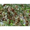Semillas De Uchuva (Physalis peruviana)