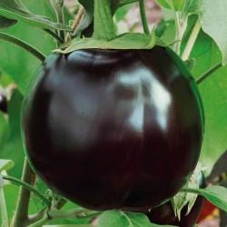 Ronde De Valence Eggplant Seeds  - 2