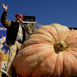 BIG MAX Pumpkin Heirloom Seeds  - 2