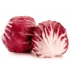 Chicoree Samen Radicchio Red Verona  - 2
