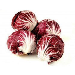 Radicchio - Chicory Seeds ''Red Verona''  - 1