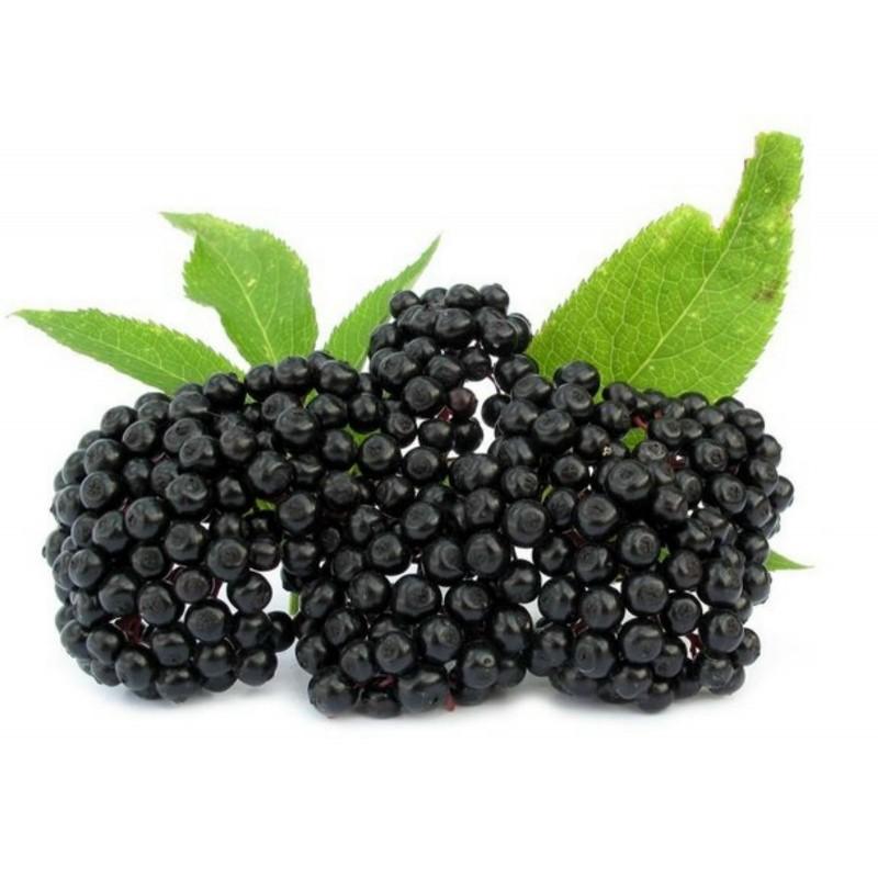 Бузина́ чёрная семена (Sambúcus nígra)  - 8