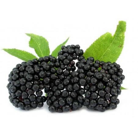Бузина́ чёрная семена (Sambúcus nígra)