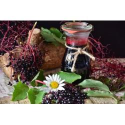 Бузина́ чёрная семена (Sambúcus nígra)  - 5