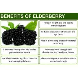 Elder - Elderberry Seeds (Sambucus nigra)  - 7