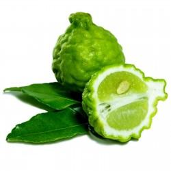 Semi di Combava (Citrus...