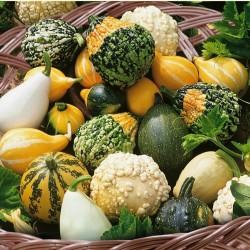 Ornamental squash mix seeds  - 4